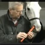 白い馬に笛を吹かせる男