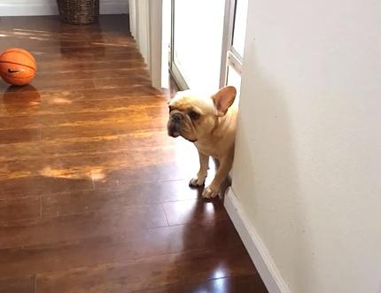 ペンをかじったのがばれた犬