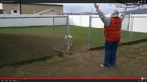 いじける犬エコー2