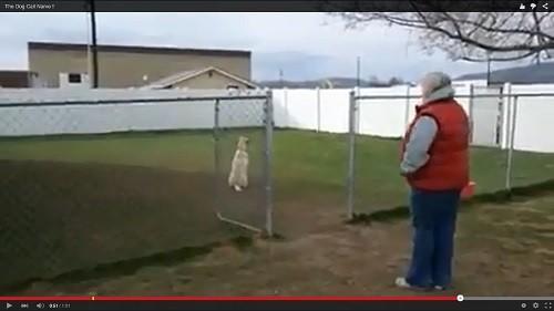 いじける犬エコー
