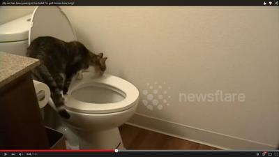 トイレの水を流さない犯人は? (4)