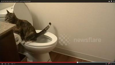 トイレの水を流さない犯人は? (1)