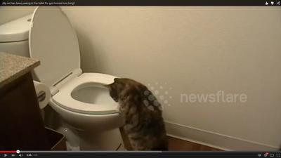 トイレの水を流さない犯人は? (2)