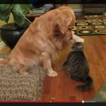 猫の頭をポンポンするわんこ (1)