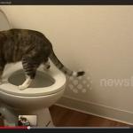 トイレの水を流さない犯人は? (3)