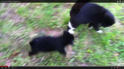 子犬を諌める猫「誰と心得る」 (1)