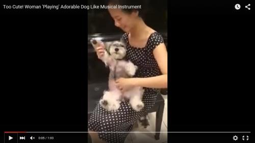 楽器のように弾かれる犬