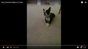 赤ちゃんとハイハイする犬 (2)
