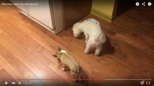 一緒に食べたい!餌を移動する犬 (3)