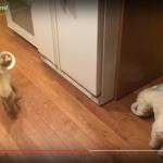 一緒に食べたい!餌を移動する犬 (2)