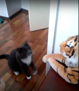 猫vs虎の行方は?